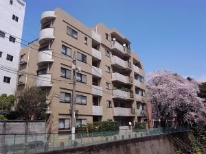 【外観】春はリビングから満開の桜が楽しめます♬
